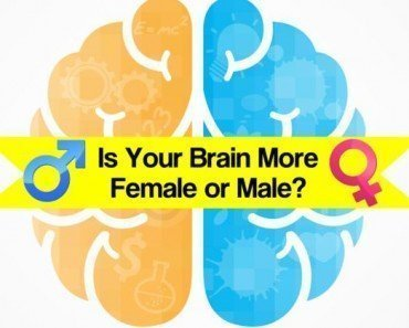 is your brain male or female