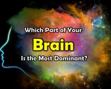 Which part of your brain is the most dominant?