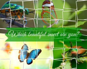 what type of beautiful insect are you quiz