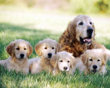 do you know why these dogs were bred quiz