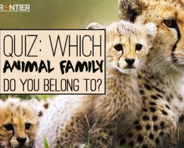 which animal family do you belong to quiz