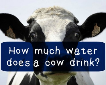 farming trivia quiz