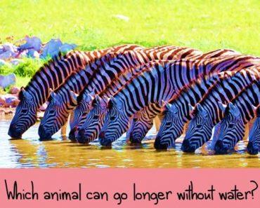 tricky animal trivia quiz