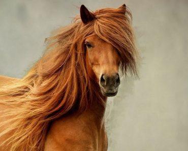 horse facts trivia quiz