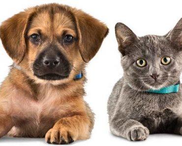pet name personality quiz