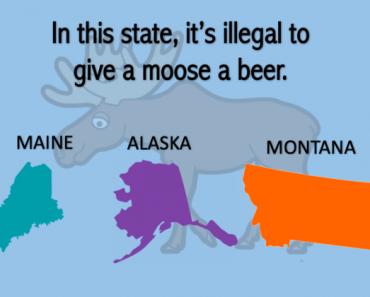 weird laws trivia quiz