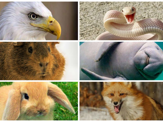 can you guess these animals hilarious internet names quiz cow