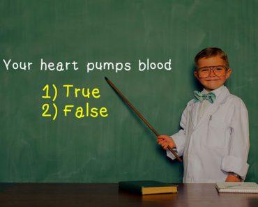 kids fact sheet