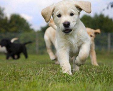 odd puppy out quiz