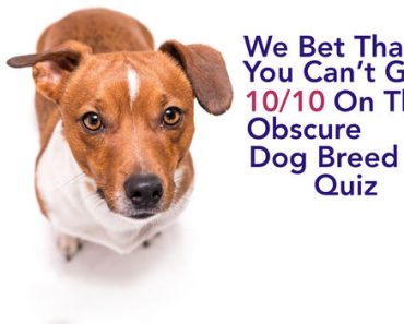 obscure dog breed trivia quiz
